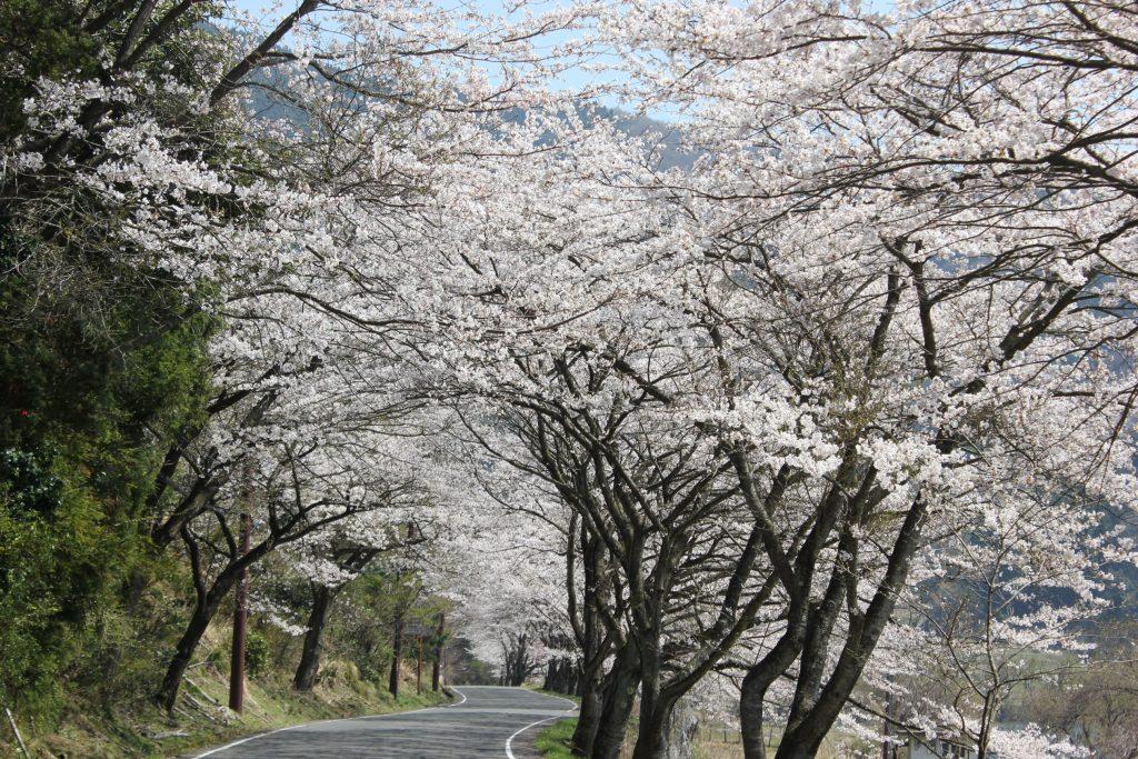 奥琵琶湖パークウェイ 自然歩道
