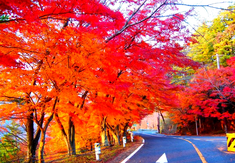 奥琵琶湖パークウェイ 紅葉